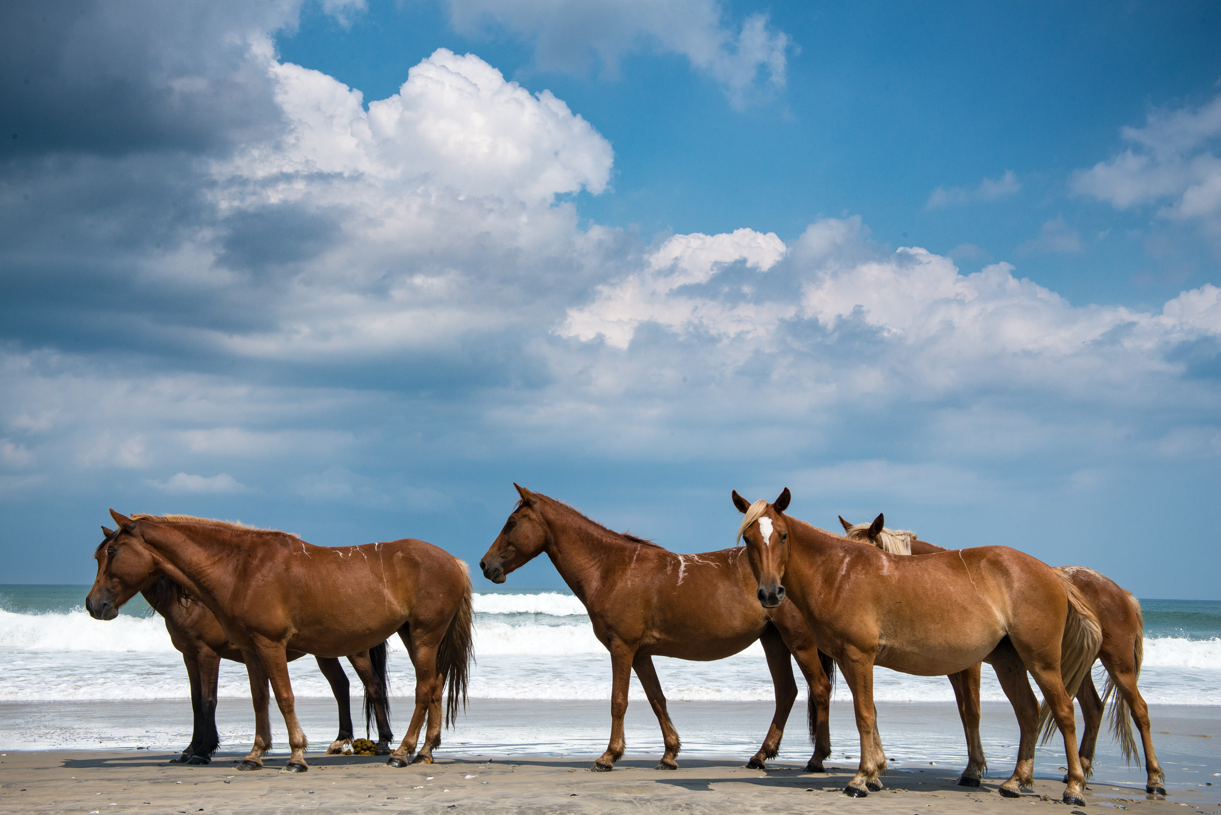 COROLLA WILD HORSE OBX